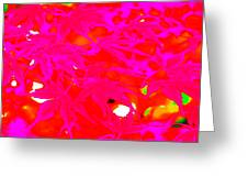 Pinky Red Greeting Card