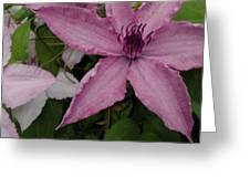 Pinky Tuscadero Greeting Card