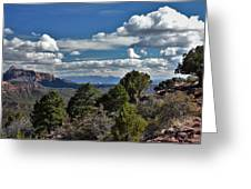 Pinon Forest At The Top Of Kolob Canyon Greeting Card