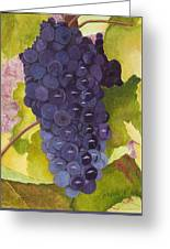 Pinot Noir Ready For Harvest Greeting Card