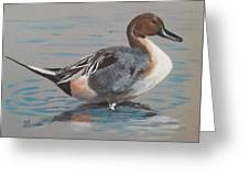 Pintail Greeting Card by Jean Ann Curry Hess