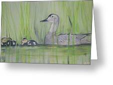Pintails In The Reeds Greeting Card
