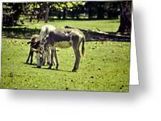 Pinto Donkey I Greeting Card