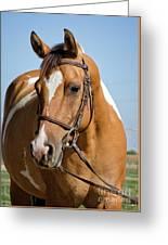 Pinto Pony Portrait Greeting Card
