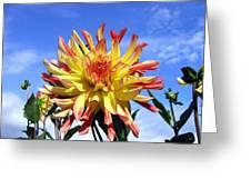 Pinwheel Dahlia Greeting Card
