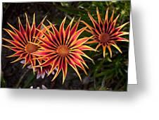 Pinwheels Greeting Card