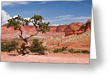 Pinyon Pine Tree Greeting Card