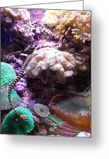 Pipe Fish And Sea Anemone  Greeting Card