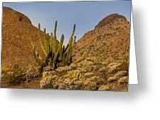Pipe Organ Cactus At Sunrise Greeting Card