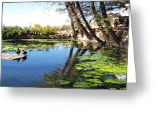 Pipe Springs Pond Greeting Card
