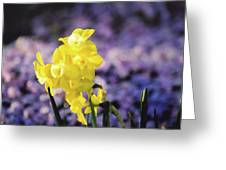 Pipit  Greeting Card
