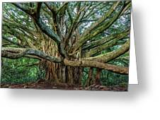 Pipiwai Banyan Greeting Card