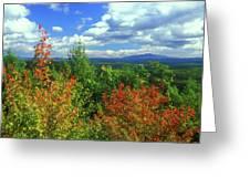 Pisgah State Park Foliage Greeting Card