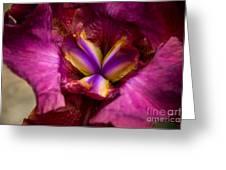 Pistil Packing Iris Greeting Card