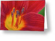 Pistil, The Female Reproductive Part Of A Flower Greeting Card