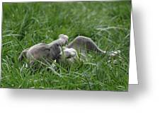 Pit Bull Puppy 4 Blue Merle Greeting Card