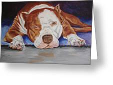 Pitbull Relaxing Greeting Card by Laura Bolle