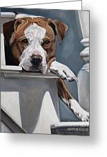 Pitbull Stare Greeting Card