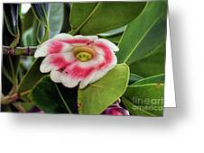 Pitch Apple Blossom Greeting Card