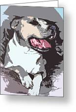 Pittbull Colors Greeting Card