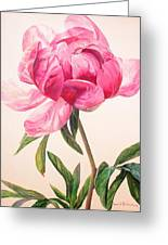 Pivoine 1 Greeting Card