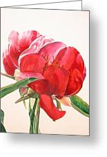 Pivoine 2 Greeting Card