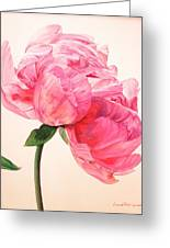 Pivoine 3 Greeting Card