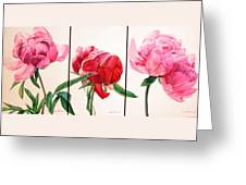 Pivoines Greeting Card