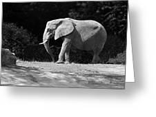 Placid Pachyderm Greeting Card