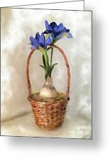 Plain Blue Iris Greeting Card