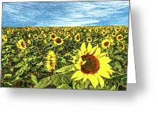 Plains Sunflowers Greeting Card by Scott Cordell