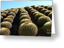 Planet Of Cactus Greeting Card