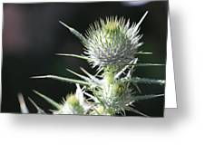 Plant 09-01-18 Greeting Card