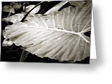 Plant 8650 Greeting Card