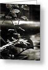 Plant 8657 Greeting Card