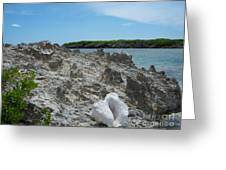 Plant And Shell On A Dominican Shore Greeting Card