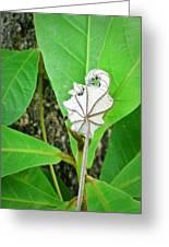 Plant Artwork Greeting Card