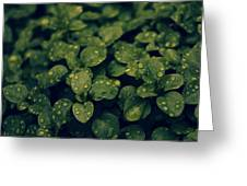 Plant Greeting Card