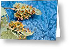 Plant Galls Greeting Card