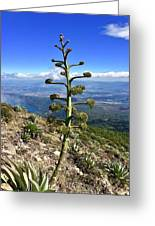 Plant On Volcano Slope Greeting Card