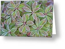 Plant Pattern Greeting Card