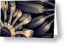 Plantains 1  Sepia Greeting Card