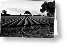 Planted Fields Greeting Card