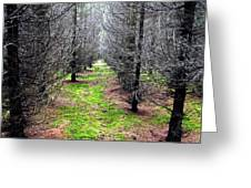 Planted Spruce Forest Greeting Card
