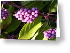 Planting Fields Purple Greeting Card