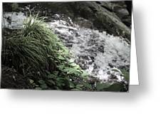 Plants By The River Greeting Card