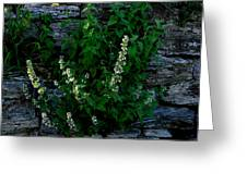 Plants Grow Anywhere Greeting Card
