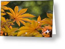 Plants Of Beauty Greeting Card