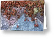 Plants On The Rock Two  Greeting Card