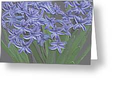 Plaster Hyacinth Greeting Card